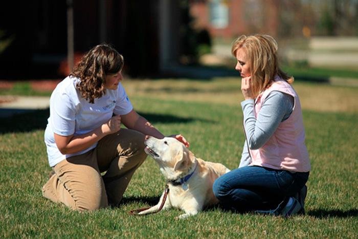 como fazer o adestramento de cães em casa 4