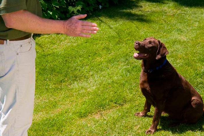 como fazer o adestramento de cães em casa 5