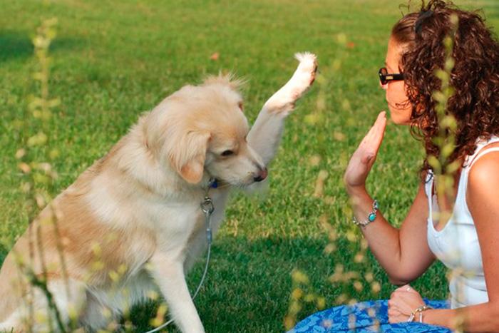 como fazer o adestramento de cães em casa 7