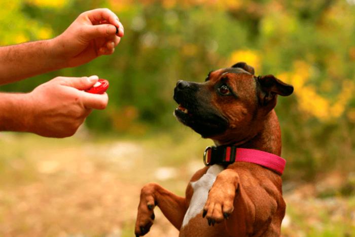 como funciona o adestramento de cães 2
