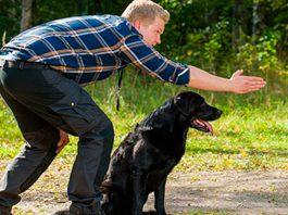como funciona o adestramento de cães 3