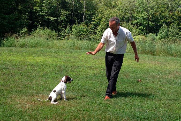 como funciona o adestramento de cães 5