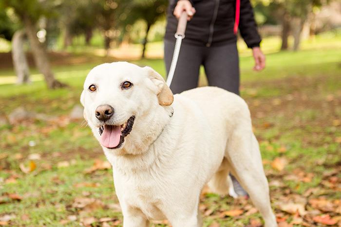dicas para o adestramento de cães