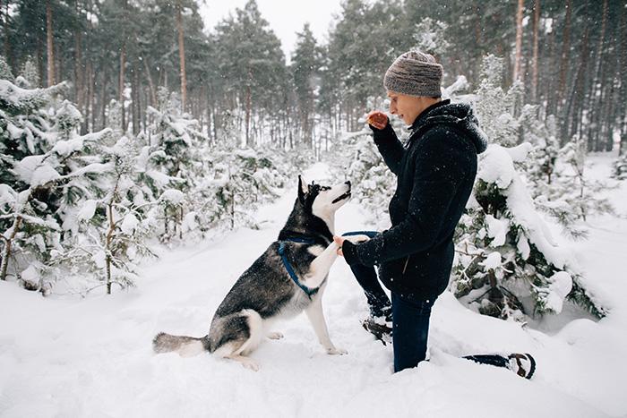 dicas para o adestramento de cães 4