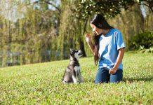 dicas para o adestramento de cães 5