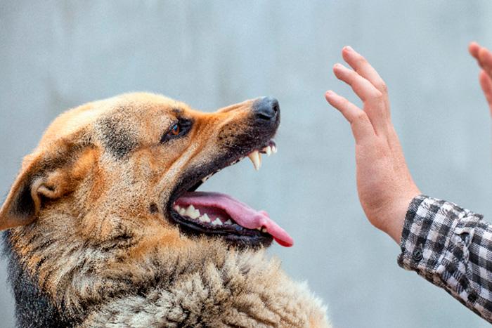 Cachorro Bravo 1