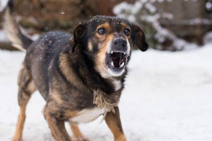 Cachorro Bravo 5