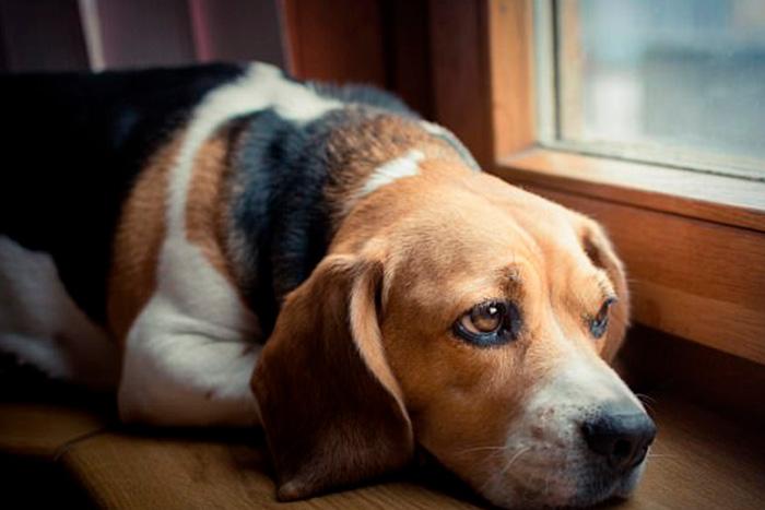 Como fazer o cachorro a parar de chorar a noite 3