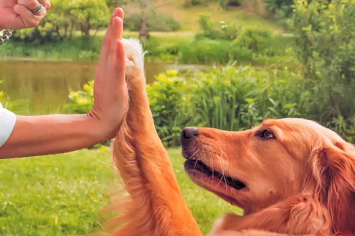 técnicas de adestramento de cães 2