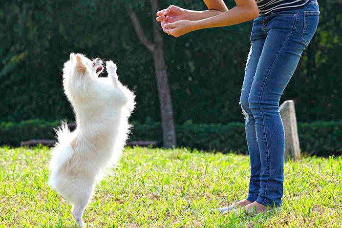 técnicas de adestramento de cães 3
