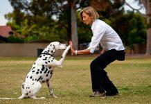 técnicas de adestramento de cães 4