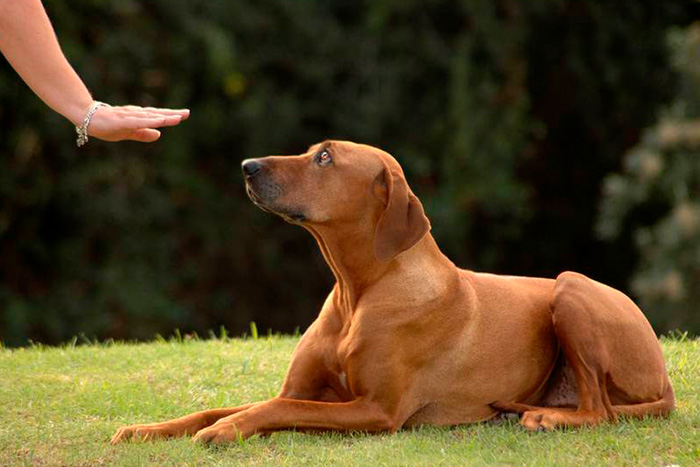 técnicas de adestramento de cães 6