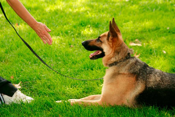 Como Adestrar Um Cachorro Com 5 Dicas Rápidas 1