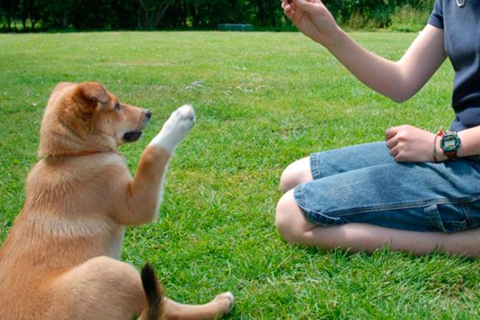 Como Adestrar Um Cachorro Com 5 Dicas Rápidas 2