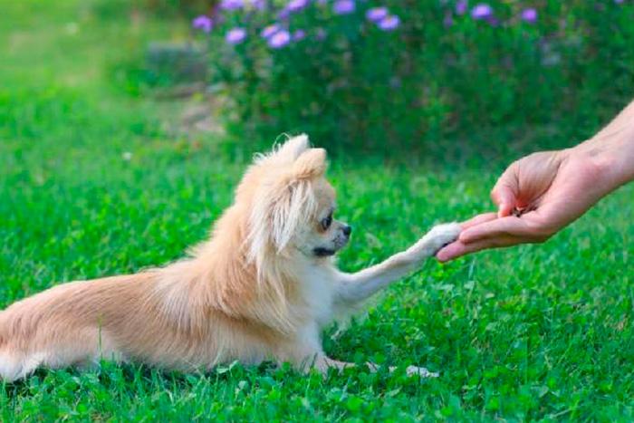 Como Adestrar Um Cachorro Com 5 Dicas Rápidas 3