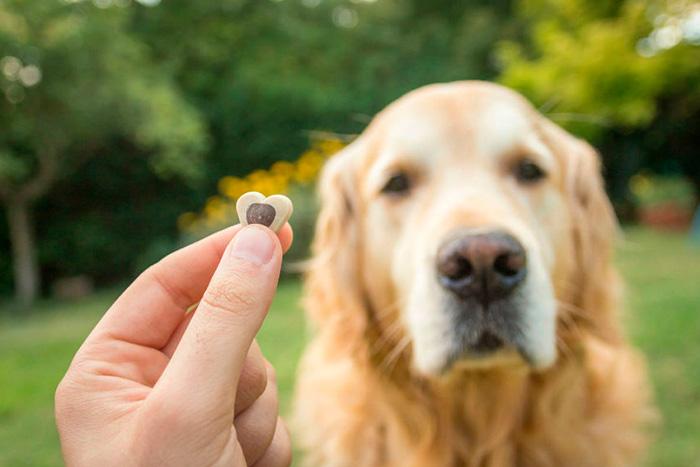 Como Adestrar Um Cachorro Com 5 Dicas Rápidas 4