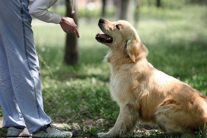Como Adestrar Um Cachorro Com 5 Dicas Rápidas 5