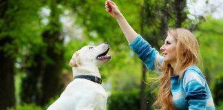 Como Adestrar Um Cachorro Com 5 Dicas Rápidas 6