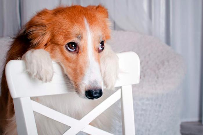 Como fazer o cachorro a parar de chorar quando fica sozinho em casa 6
