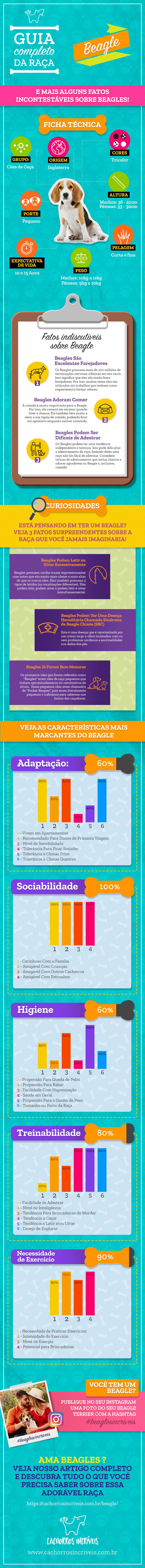 infográfico beagle