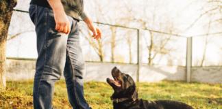 Como Ensinar o Cachorro a Deitar 6